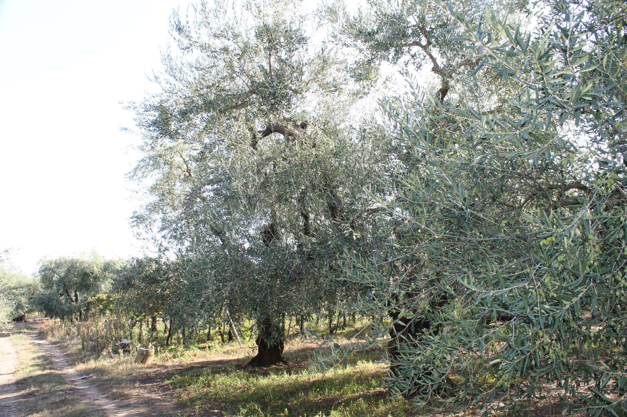 Terreno Agricolo in vendita a Andria, 9999 locali, prezzo € 14.700 | CambioCasa.it
