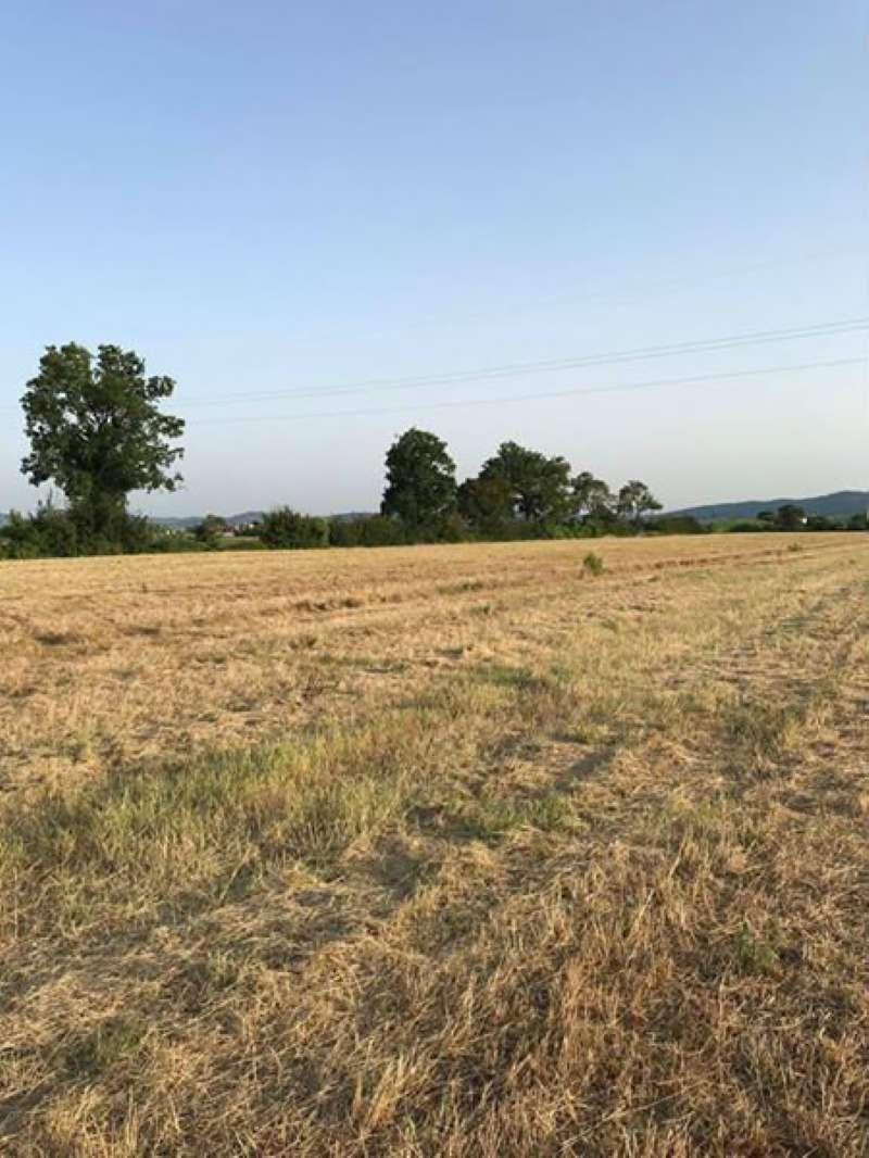 Terreni agricoli Paperino-Castelnuovo Rif. 5305692
