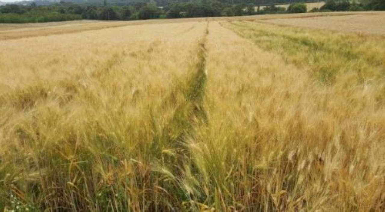 Terreno Agricolo in vendita a Moglia, 9999 locali, prezzo € 590.000 | PortaleAgenzieImmobiliari.it