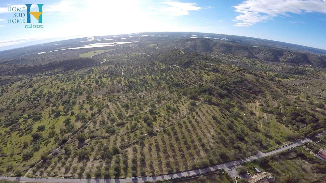 Uliveto Panoramico con Terrazza Rif. 8162520